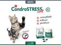 Condrostress® (+) Cat (MB0154-06-2017)