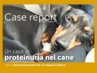 Case report - Un caso di proteinuria nel cane (MB0191)