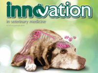 InnVetMed (41) - Inflammaging: dolore e psiche nel cane anziano (MB0196)
