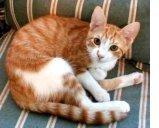 Le sette vite non proteggono il gatto dall'invecchiamento articolare