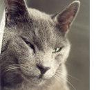 Anche i gatti invecchiano
