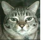 Anche il gatto soffre di artrosi