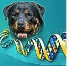 Progetto GENOMA: una mappa anche per il cane