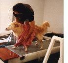 Fisioterapia al SIMESC 2002