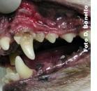 Insieme contro le malattie della bocca