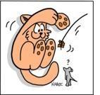 AVMA 2003: demenza senile del gatto