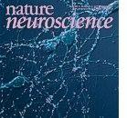 Cervello: più è vecchio e più è rigido
