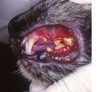 Mastociti nella mucosa orale