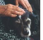 SCIVAC 2004 Focus on sulla demenza senile