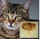 Allergia: diversa per gatto e polvere