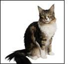 Artrosi nel gatto: asintomatica, ma presente