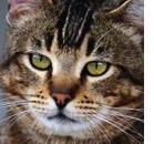 Linee guida per la cura del gatto anziano