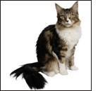 Artrosi nel gatto, senza dubbio!