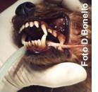 Malattia parodontale: prevenire è meglio
