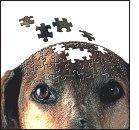 Nuovo test per la demenza senile del cane