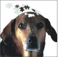 Invecchiamento cerebrale: come riconoscerlo?