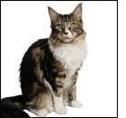Prevalenza dell'artrosi nel gatto