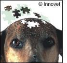 Beta-amiloide nel cervello del cane anziano