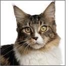 Artrosi nel gatto: ultime evidenze