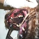 Parodontite su Veterinary Medicine
