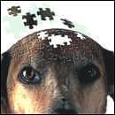 Neurodegenerazione senile: se ne parla alla MVC