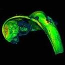 Cartilagine: proteoglicani ai raggi X