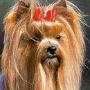 Il profilo comportamentale delle razze canine