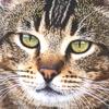 Considerare il gatto geriatrico