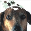 "Fosfatidilserina: evidenze nel ""brain aging"""