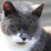 A Vicenza il gatto con l'artrosi
