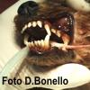 Malattia parodontale: curare o aspettare?