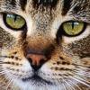 Disfunzione Cognitiva anche nel gatto