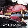 Epidemiologia delle malattia parodontale