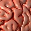 Resveratrolo contro l'invecchiamento cerebrale