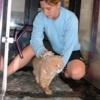 Fisioterapia nel gatto