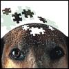 Cane anziano: i rischi di demenza