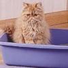 Cistite del gatto: svelato l'enigma