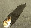 Gatti nell'ombra