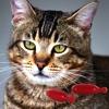 Senilife®: indicazioni d'uso nel gatto