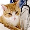 Gatti in salute