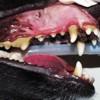 Il BOA del dentista