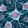 PS modula il dialogo tra neuroni