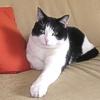 Il gatto: origini, domesticazione, e comportamento