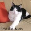 Artrosi: primo modello nel gatto