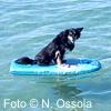Naviga nel Web per vacanze da Pet
