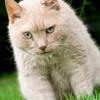 Artrosi: nuovi dati nel gatto