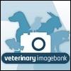 Una banca delle immagini veterinarie