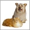 Le dieci più frequenti malattie del cane e del gatto