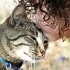 Allergia ai gatti: in arrivo il vaccino