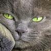 PEA nella IBD del gatto